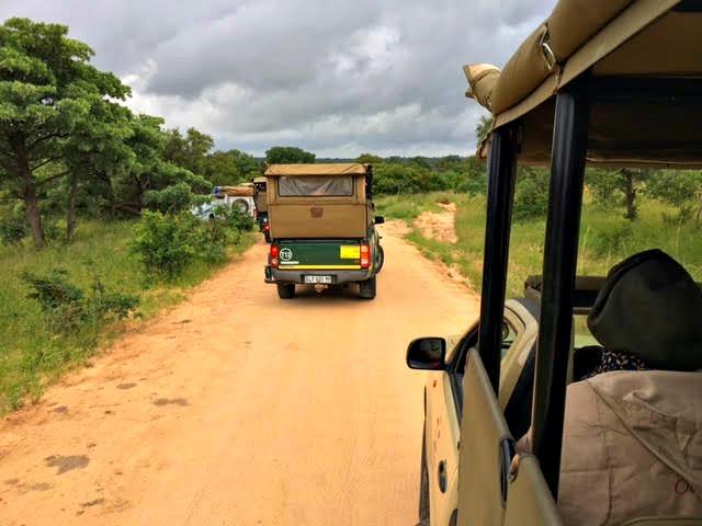 safári África