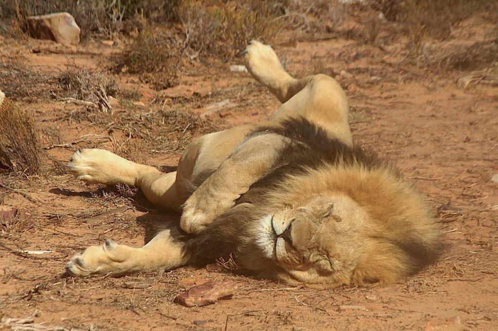 safári África do Sul