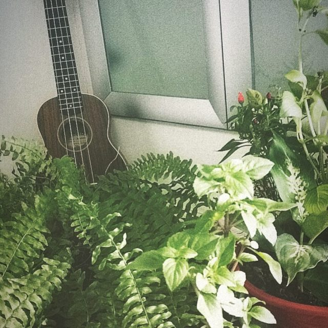 Ukulele e suas amigas  ukulelebrasil ukelele verde mato bsbhellip